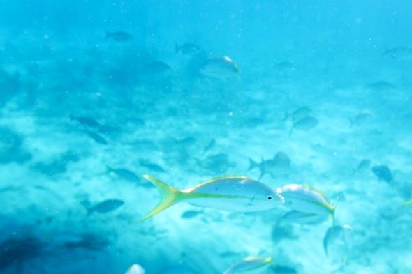 Snorkeling in Islamorada, Florida