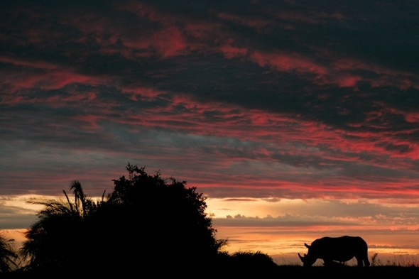 rhino-african-sunset-Beverly-Joubert