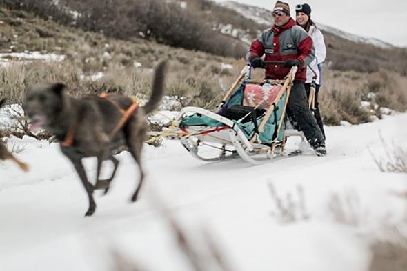 Dog Sledding in Utah at Rocky Mountain Recreation