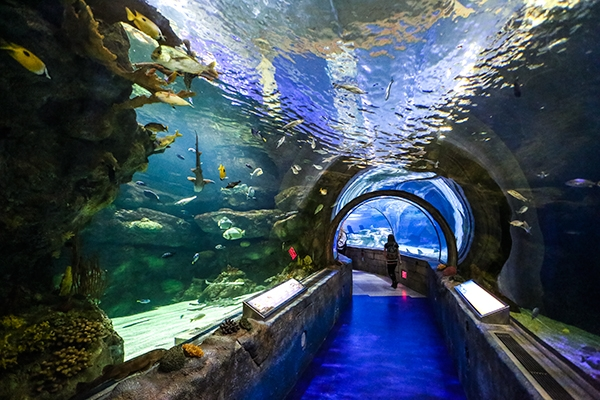 Snorkeling at the Mall of America in Bloomington, MN