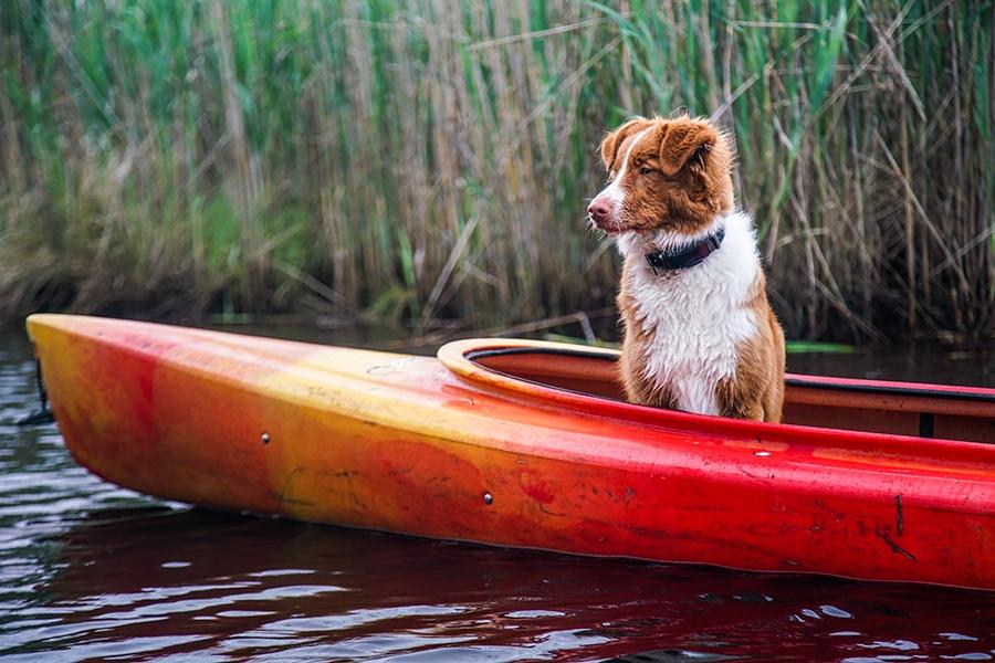 Kayaking Through The Back Bay National Wildlife Refuge In Virginia Beach