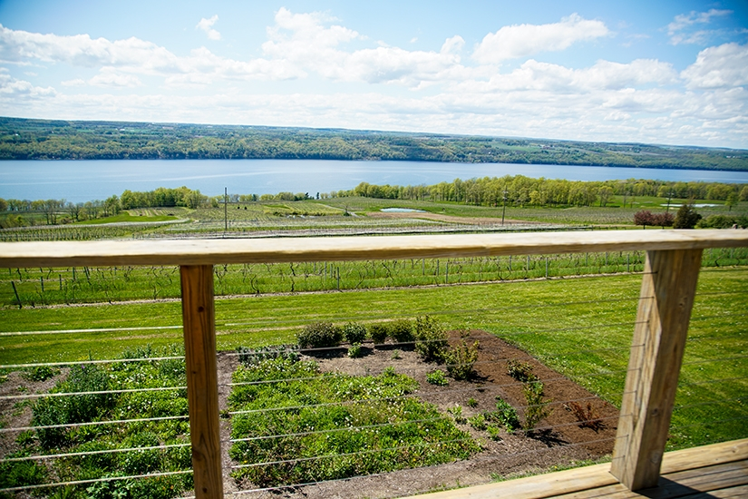Atwater Vineyards, Winery and Brewery Trail, Finger Lakes, New York