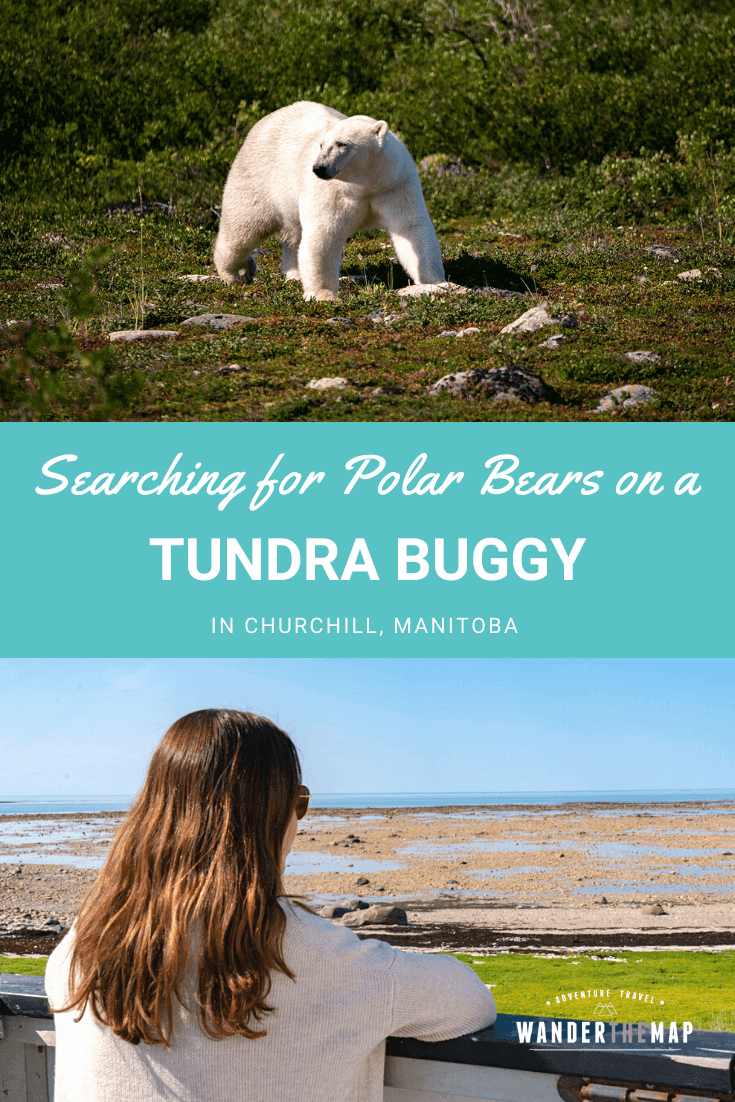 Canada Adventures | Searching for Polar Bears on a Tundra Buggy Adventure in Churchill, Manitoba | #Canada #Wildlife #Travel #Adventure